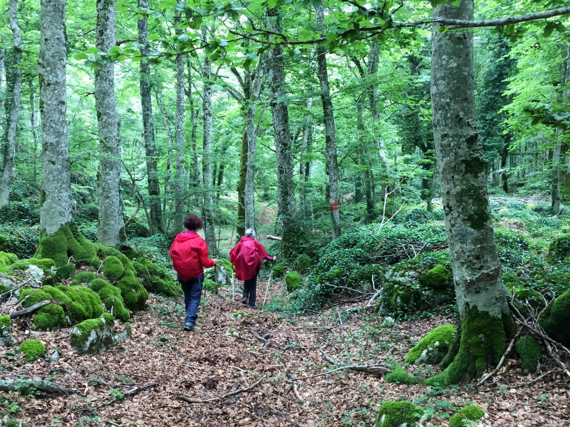 bosco molise trekking