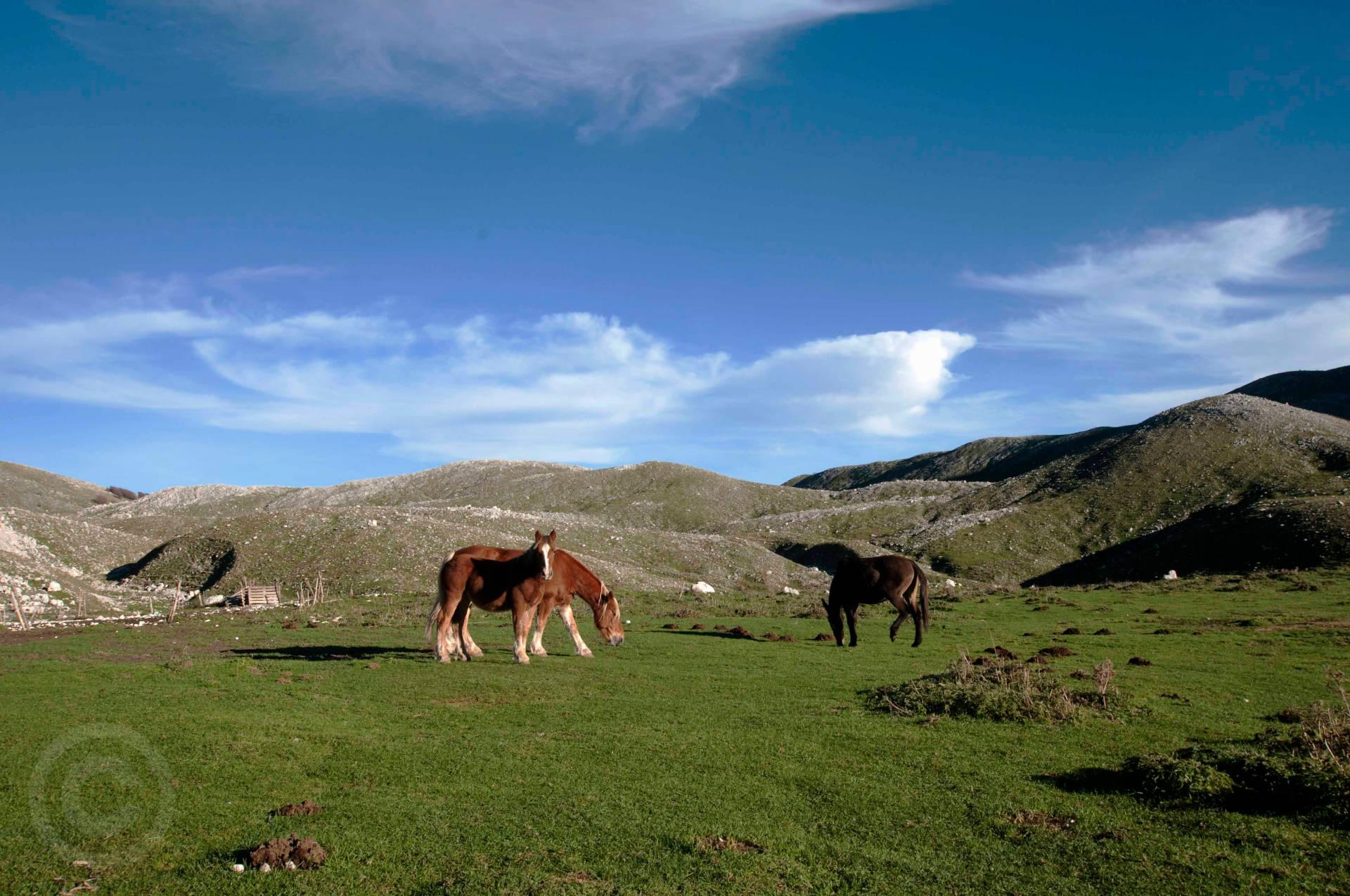 cavallo campo puzzo matese san massimo campobasso
