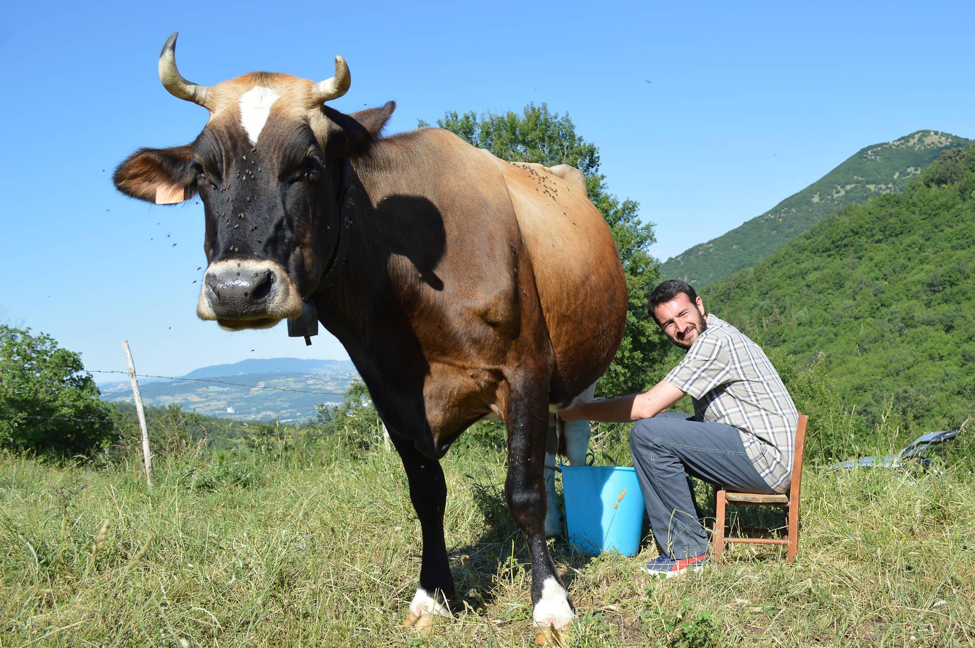 turismo esperienziale molise mucca