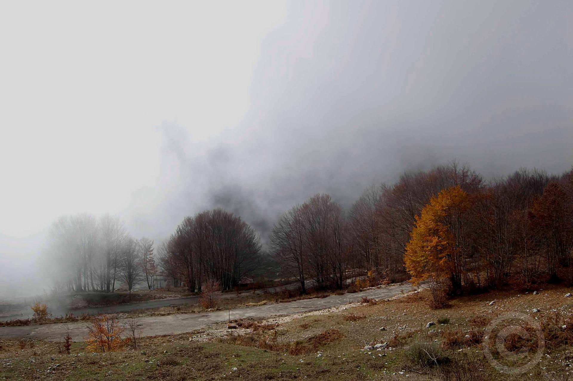 nebbia bosco roccamandolfi molise