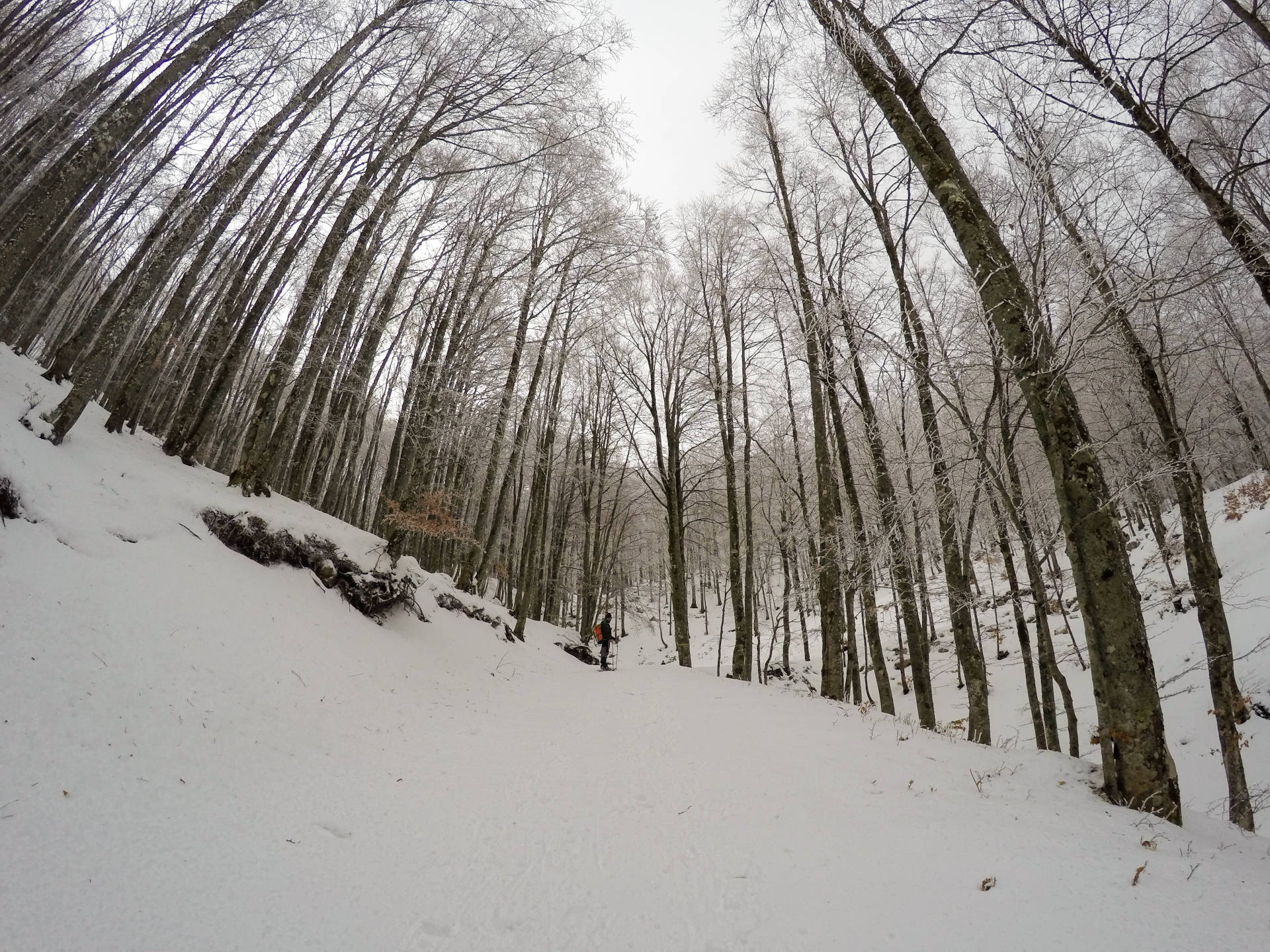 snowshoeing molise