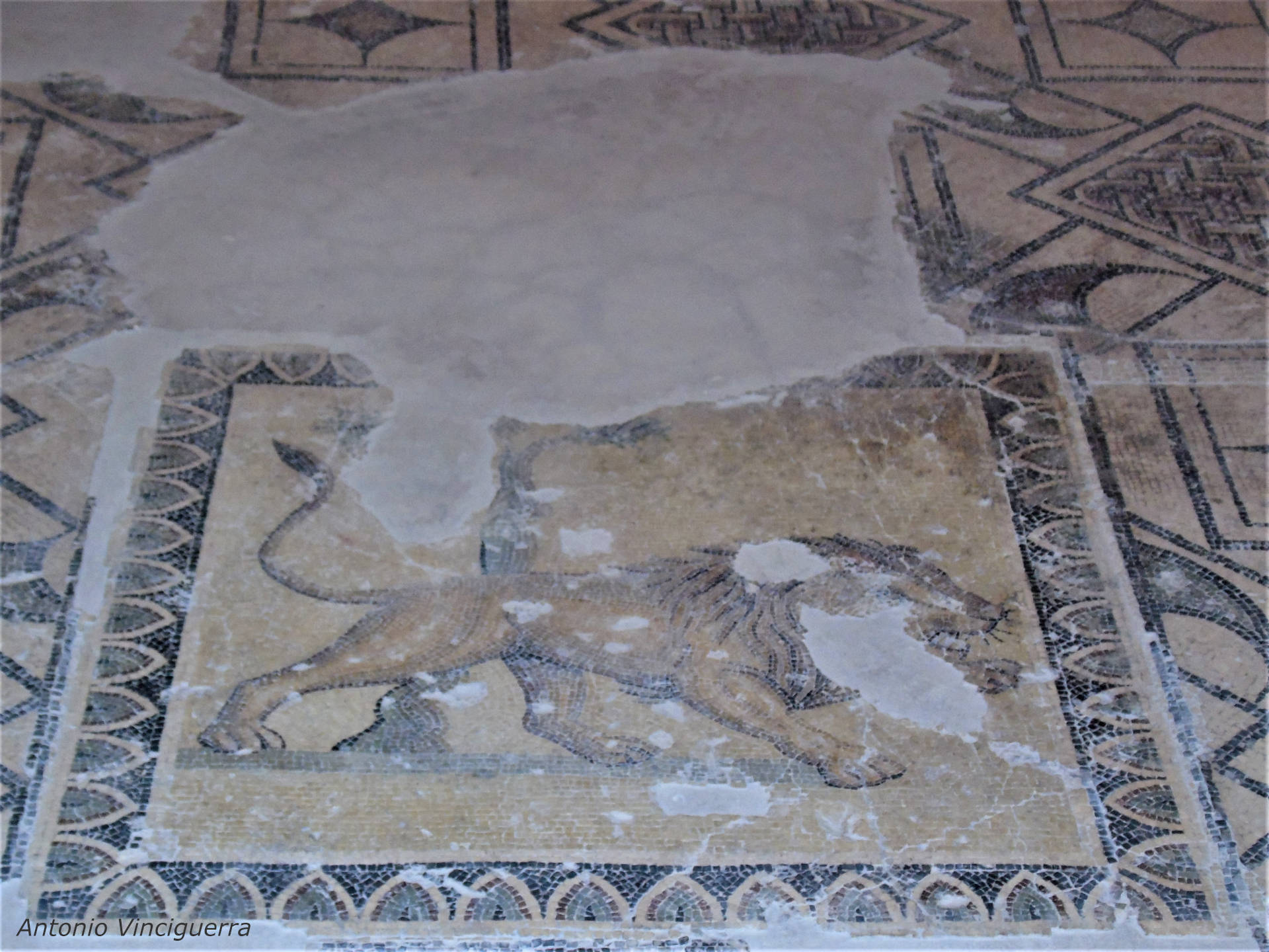 larino mosaico villa romana campobasso molise